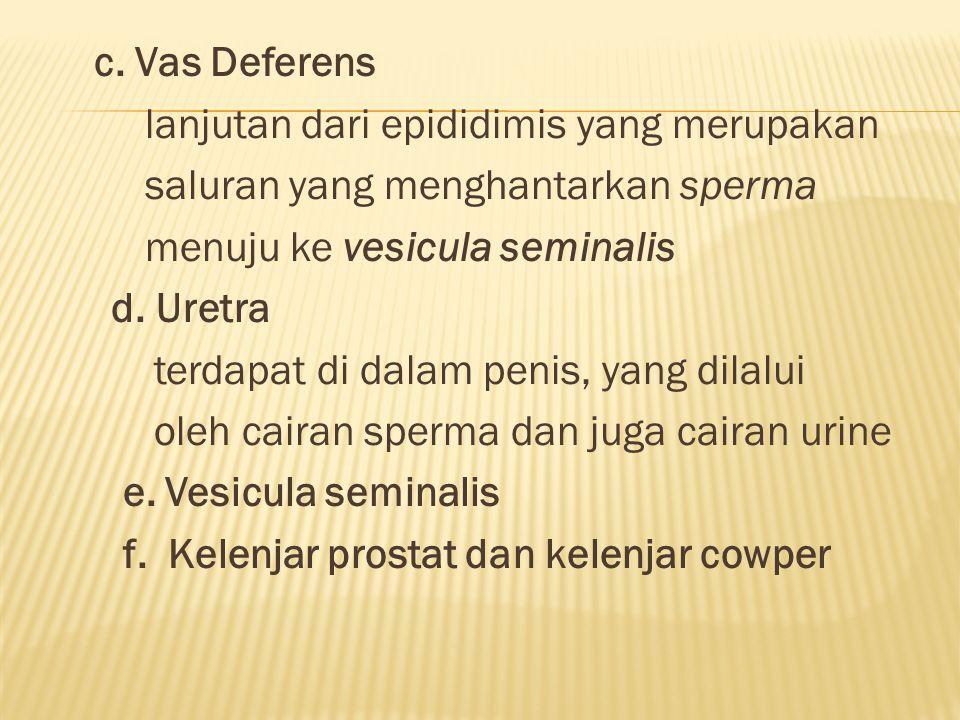 c. Vas Deferens lanjutan dari epididimis yang merupakan saluran yang menghantarkan sperma menuju ke vesicula seminalis d. Uretra terdapat di dalam pen
