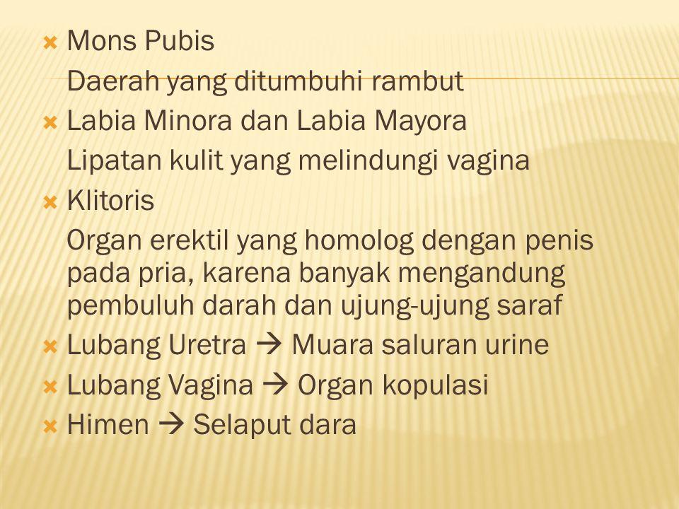  Mons Pubis Daerah yang ditumbuhi rambut  Labia Minora dan Labia Mayora Lipatan kulit yang melindungi vagina  Klitoris Organ erektil yang homolog dengan penis pada pria, karena banyak mengandung pembuluh darah dan ujung-ujung saraf  Lubang Uretra  Muara saluran urine  Lubang Vagina  Organ kopulasi  Himen  Selaput dara