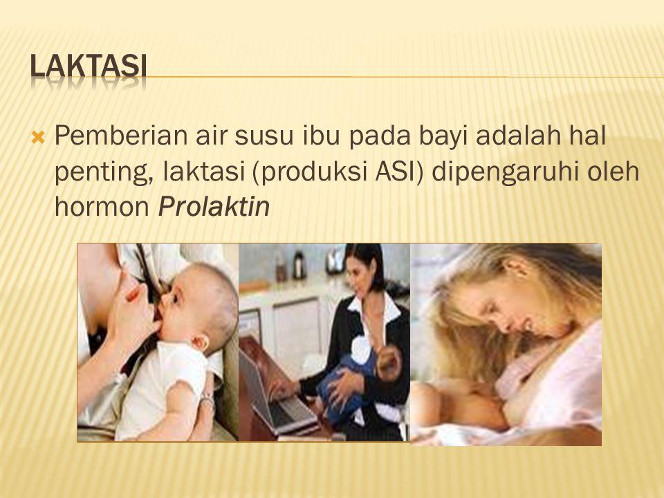  Pemberian air susu ibu pada bayi adalah hal penting, laktasi (produksi ASI) dipengaruhi oleh hormon Prolaktin