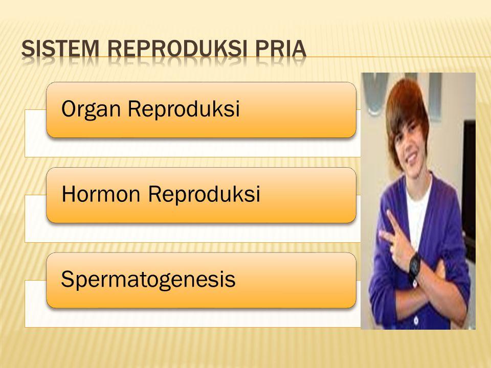 Organ ReproduksiHormon ReproduksiSpermatogenesis