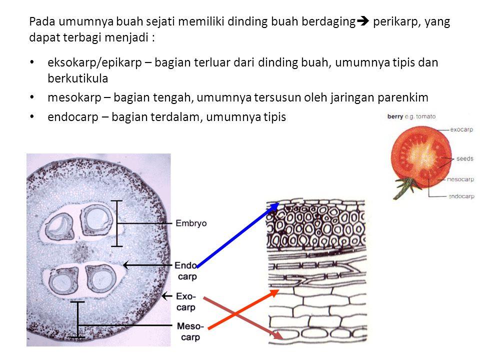 Pada umumnya buah sejati memiliki dinding buah berdaging  perikarp, yang dapat terbagi menjadi : eksokarp/epikarp – bagian terluar dari dinding buah, umumnya tipis dan berkutikula mesokarp – bagian tengah, umumnya tersusun oleh jaringan parenkim endocarp – bagian terdalam, umumnya tipis