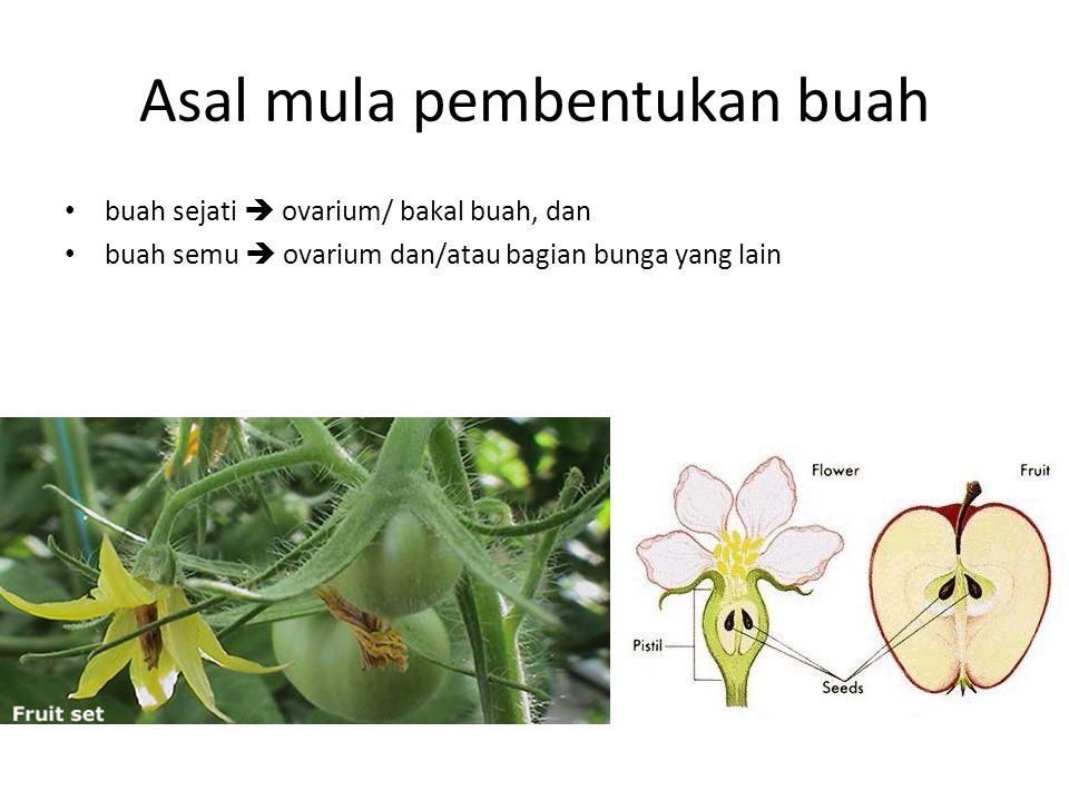 Asal mula pembentukan buah buah sejati  ovarium/ bakal buah, dan buah semu  ovarium dan/atau bagian bunga yang lain