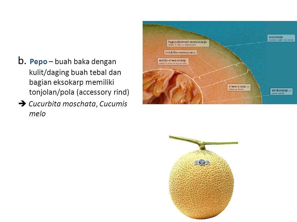 b. Pepo – buah baka dengan kulit/daging buah tebal dan bagian eksokarp memiliki tonjolan/pola (accessory rind)  Cucurbita moschata, Cucumis melo