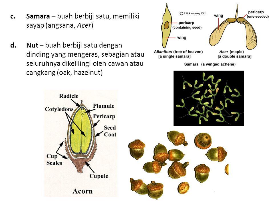 c.Samara – buah berbiji satu, memiliki sayap (angsana, Acer) d.Nut – buah berbiji satu dengan dinding yang mengeras, sebagian atau seluruhnya dikelilingi oleh cawan atau cangkang (oak, hazelnut)