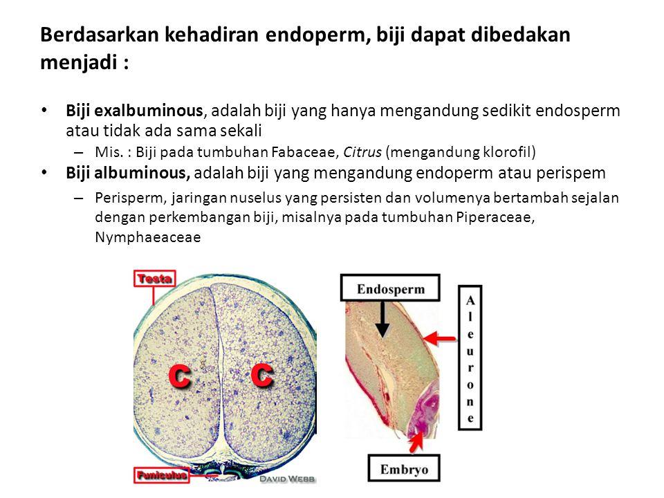 Berdasarkan kehadiran endoperm, biji dapat dibedakan menjadi : Biji exalbuminous, adalah biji yang hanya mengandung sedikit endosperm atau tidak ada sama sekali – Mis.