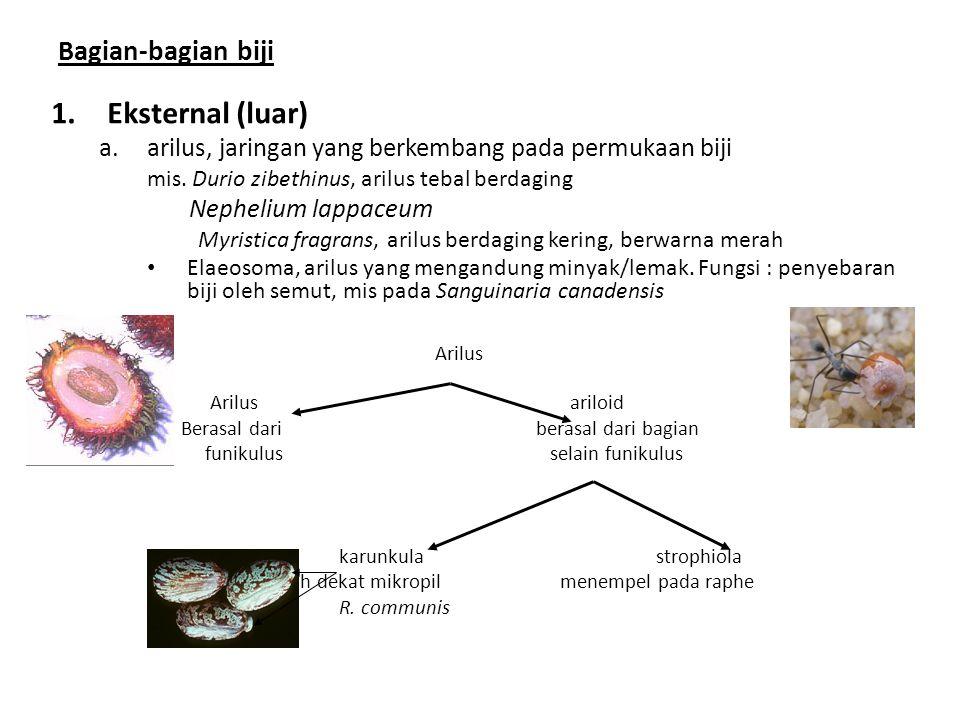 Bagian-bagian biji 1.Eksternal (luar) a.arilus, jaringan yang berkembang pada permukaan biji mis.