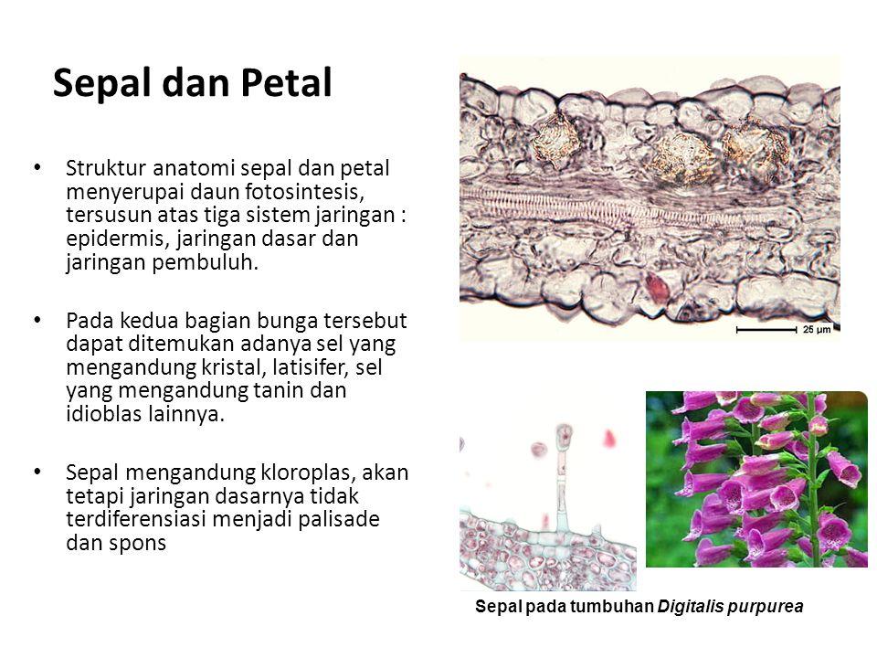 Sepal dan Petal Struktur anatomi sepal dan petal menyerupai daun fotosintesis, tersusun atas tiga sistem jaringan : epidermis, jaringan dasar dan jaringan pembuluh.
