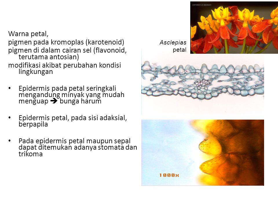 Warna petal, pigmen pada kromoplas (karotenoid) pigmen di dalam cairan sel (flavonoid, terutama antosian) modifikasi akibat perubahan kondisi lingkungan Epidermis pada petal seringkali mengandung minyak yang mudah menguap  bunga harum Epidermis petal, pada sisi adaksial, berpapila Pada epidermis petal maupun sepal dapat ditemukan adanya stomata dan trikoma Asclepias petal