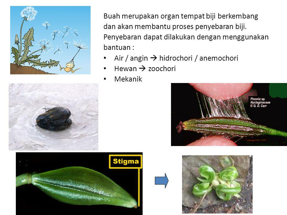 Buah merupakan organ tempat biji berkembang dan akan membantu proses penyebaran biji. Penyebaran dapat dilakukan dengan menggunakan bantuan : Air / an