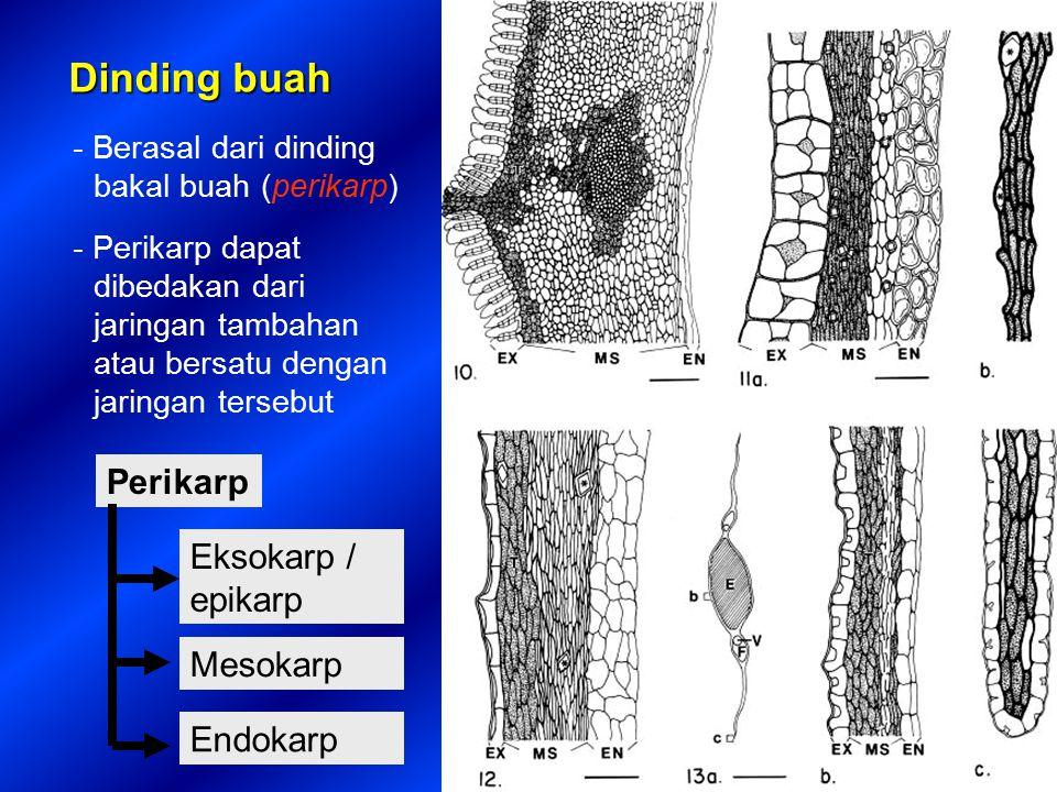 Winkler (1939) klasifikasi buah menggunakan 4 sifat: (1) Buah berganda, bila karpel bunga tidak saling bersatu (2) Buah satuan, bila karpel bersatu (3) Buah bebas, bila berasal dari bakal buah superus (4) Buah piala, bila berasal dari bakal buah inferus yang tertanam dalam jaringan non-karpel yang berbentuk piala (cangkir) atau dari bakal buah superus yang berasosiasi dengan hipentium (reseptakulum datar atau cekung) Klasifikasi morfologis mempunyai kelemahan modifikasi fungsional yang terabaikan