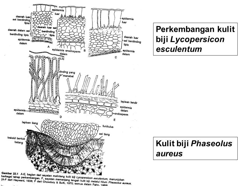 Perkembangan kulit biji Lycopersicon esculentum Kulit biji Phaseolus aureus