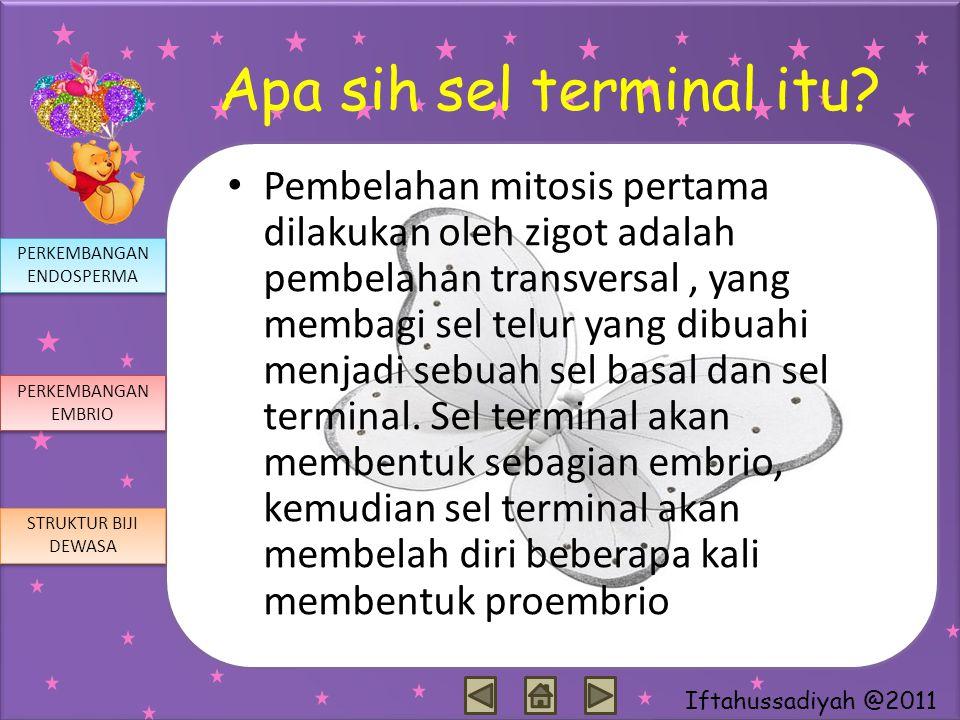 Iftahussadiyah @2011 Apa sih sel terminal itu? Pembelahan mitosis pertama dilakukan oleh zigot adalah pembelahan transversal, yang membagi sel telur y