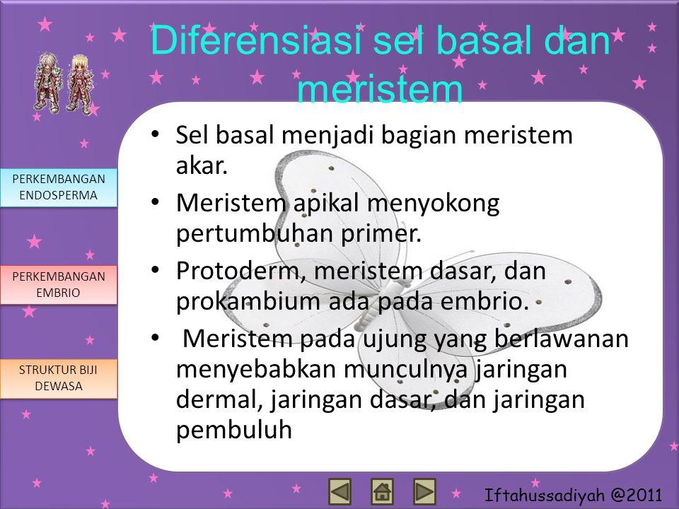 Iftahussadiyah @2011 Diferensiasi sel basal dan meristem Sel basal menjadi bagian meristem akar. Meristem apikal menyokong pertumbuhan primer. Protode