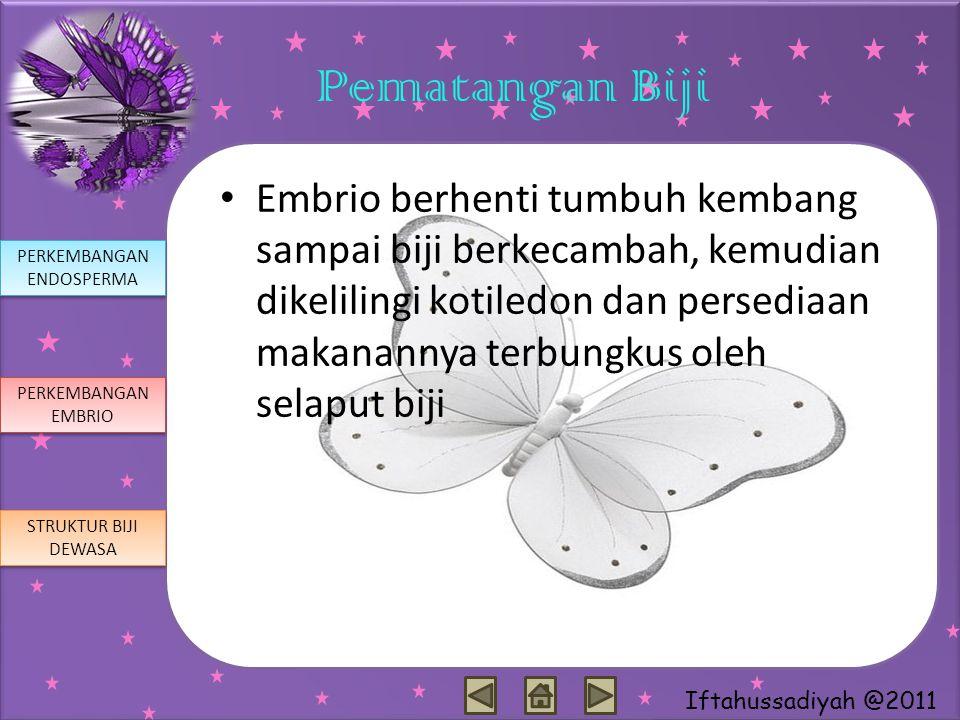 Iftahussadiyah @2011 Pematangan Biji Embrio berhenti tumbuh kembang sampai biji berkecambah, kemudian dikelilingi kotiledon dan persediaan makanannya