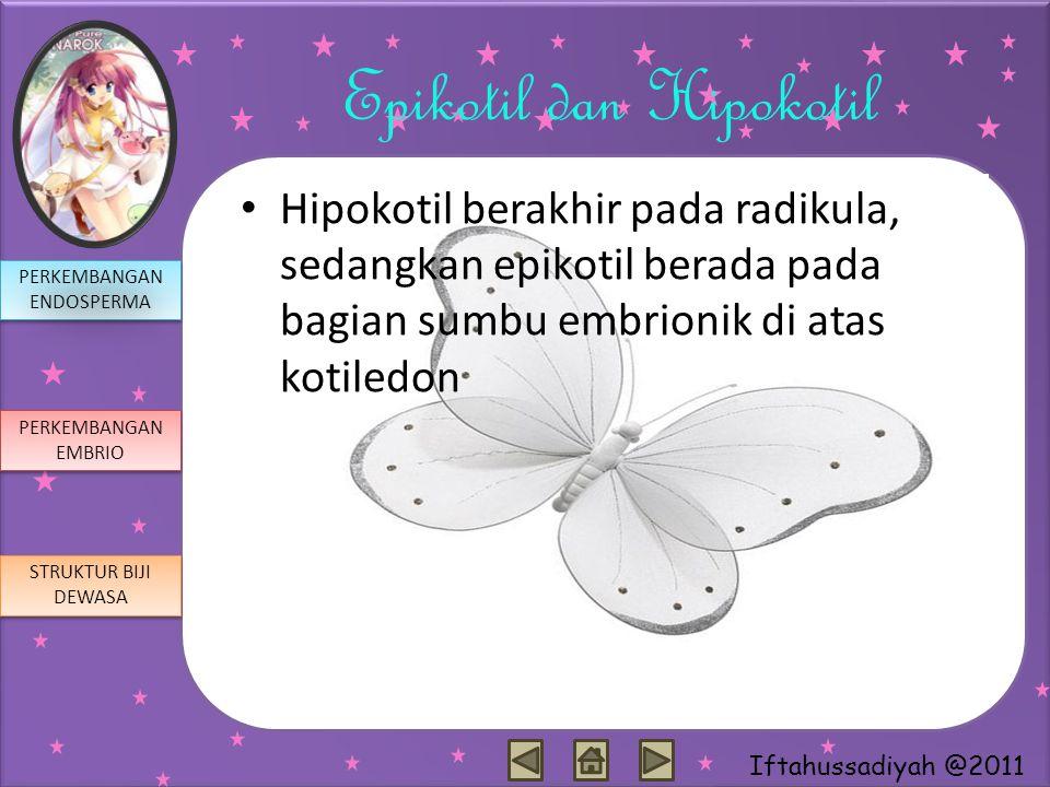 Iftahussadiyah @2011 Epikotil dan Hipokotil Hipokotil berakhir pada radikula, sedangkan epikotil berada pada bagian sumbu embrionik di atas kotiledon