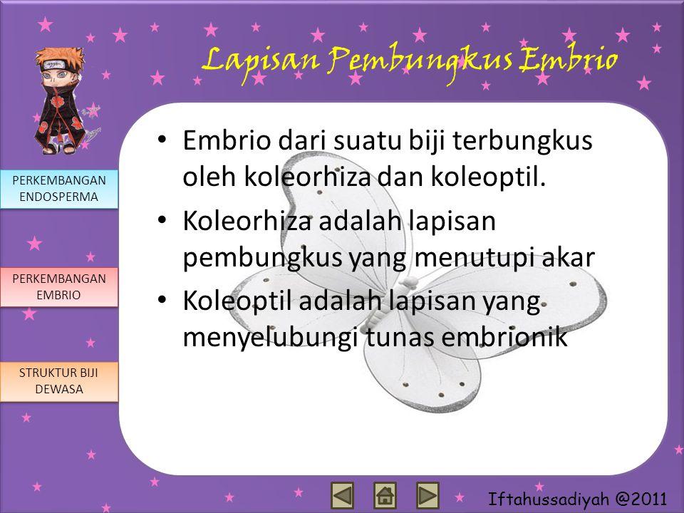 Iftahussadiyah @2011 Lapisan Pembungkus Embrio Embrio dari suatu biji terbungkus oleh koleorhiza dan koleoptil. Koleorhiza adalah lapisan pembungkus y