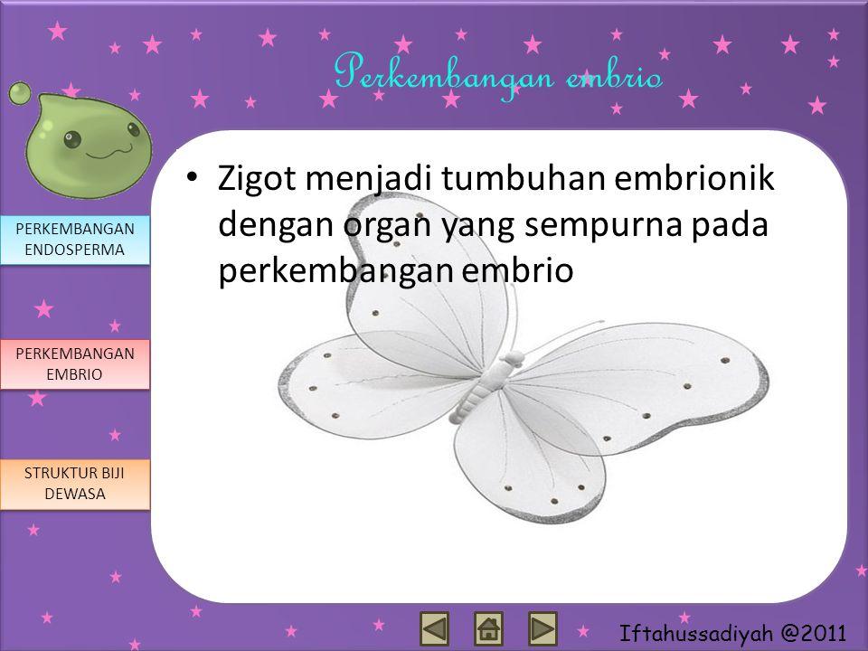 Iftahussadiyah @2011 Perkembangan embrio Zigot menjadi tumbuhan embrionik dengan organ yang sempurna pada perkembangan embrio PERKEMBANGAN ENDOSPERMA