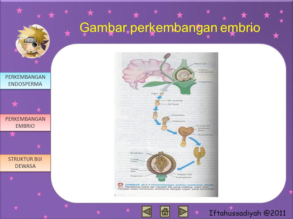 Iftahussadiyah @2011 Gambar perkembangan embrio PERKEMBANGAN ENDOSPERMA PERKEMBANGAN ENDOSPERMA PERKEMBANGAN EMBRIO PERKEMBANGAN EMBRIO STRUKTUR BIJI