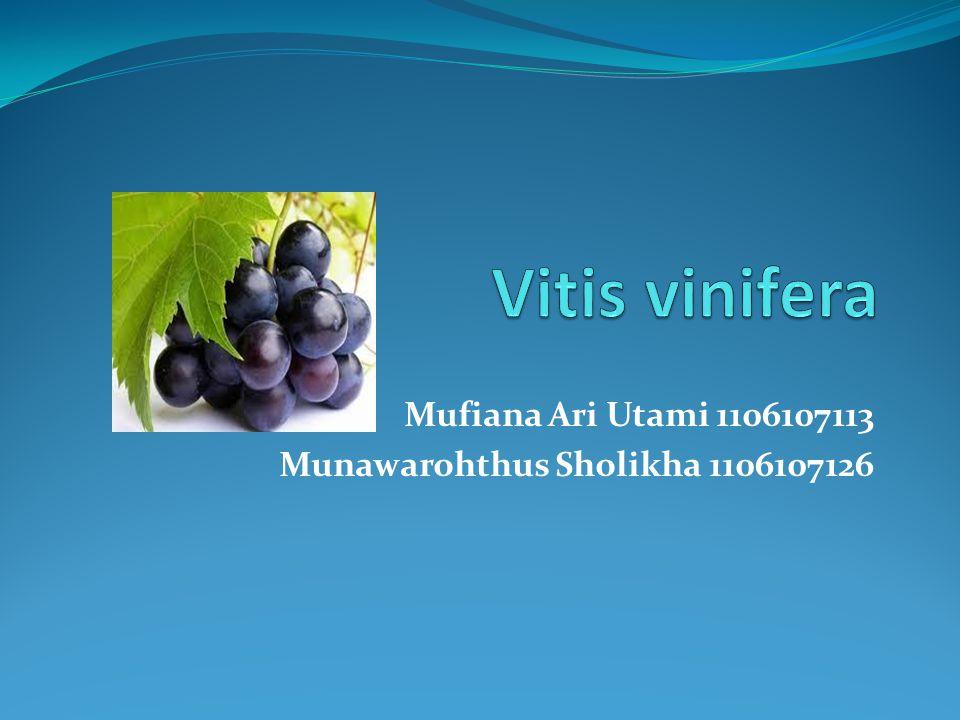 Mufiana Ari Utami 1106107113 Munawarohthus Sholikha 1106107126