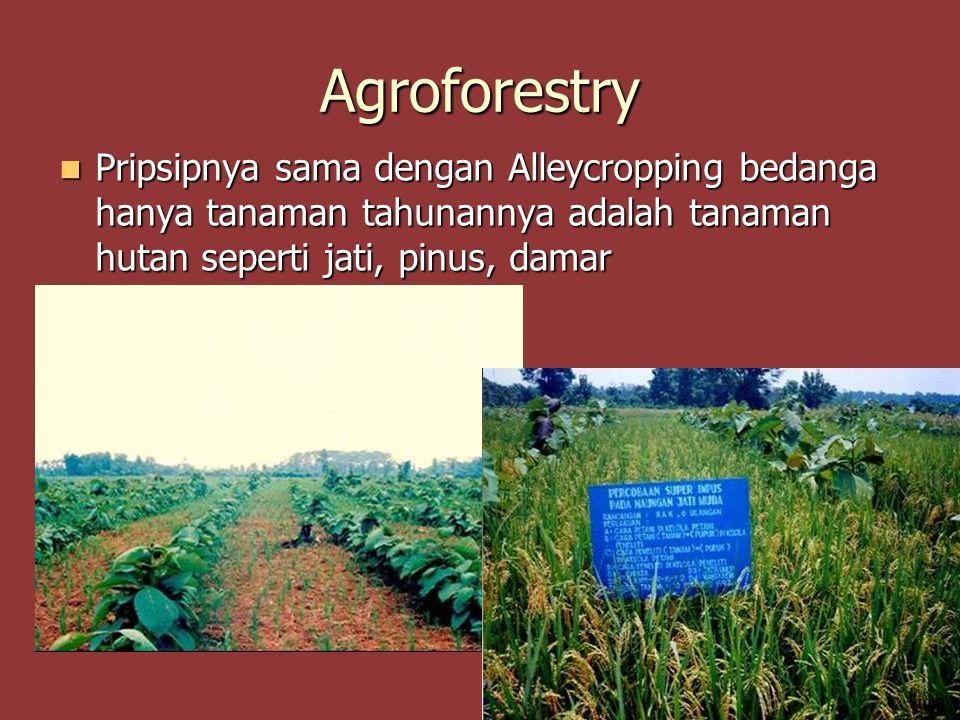 Agroforestry Pripsipnya sama dengan Alleycropping bedanga hanya tanaman tahunannya adalah tanaman hutan seperti jati, pinus, damar Pripsipnya sama den
