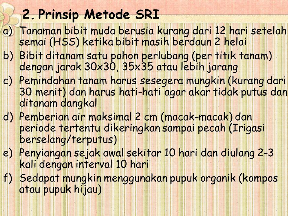3.Gambar metode SRI a)Jarak tanam b)Benih padi yang ditanam
