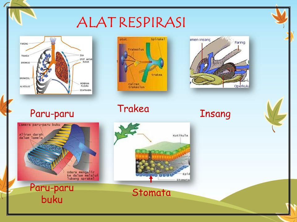 Ringkasan Ciri-ciri makhluk hidup: 1.Bernapas (respirasi) 2.