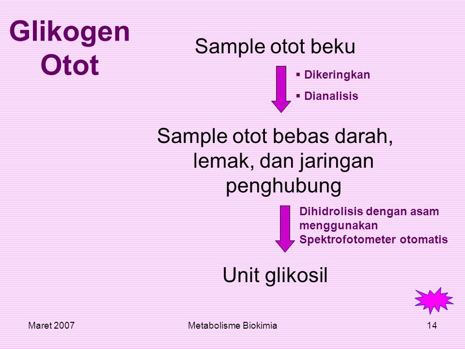Maret 2007Metabolisme Biokimia14 Glikogen Otot Sample otot beku Sample otot bebas darah, lemak, dan jaringan penghubung Unit glikosil  Dikeringkan ia