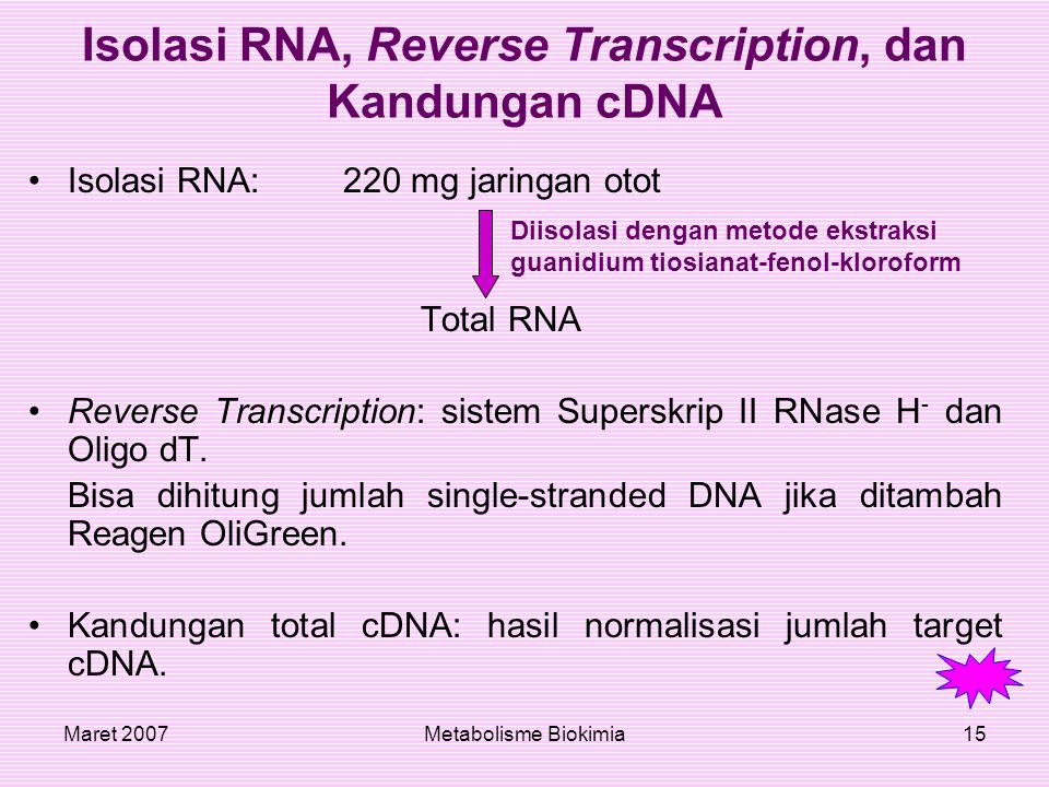 Maret 2007Metabolisme Biokimia15 Isolasi RNA, Reverse Transcription, dan Kandungan cDNA Isolasi RNA:220 mg jaringan otot Total RNA Reverse Transcripti