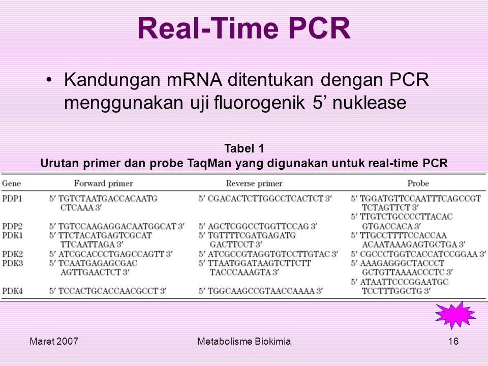 Maret 2007Metabolisme Biokimia16 Real-Time PCR Kandungan mRNA ditentukan dengan PCR menggunakan uji fluorogenik 5' nuklease Tabel 1 Urutan primer dan