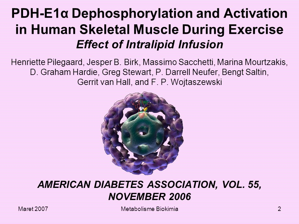 Maret 2007Metabolisme Biokimia2 PDH-E1α Dephosphorylation and Activation in Human Skeletal Muscle During Exercise Effect of Intralipid Infusion Henriette Pilegaard, Jesper B.