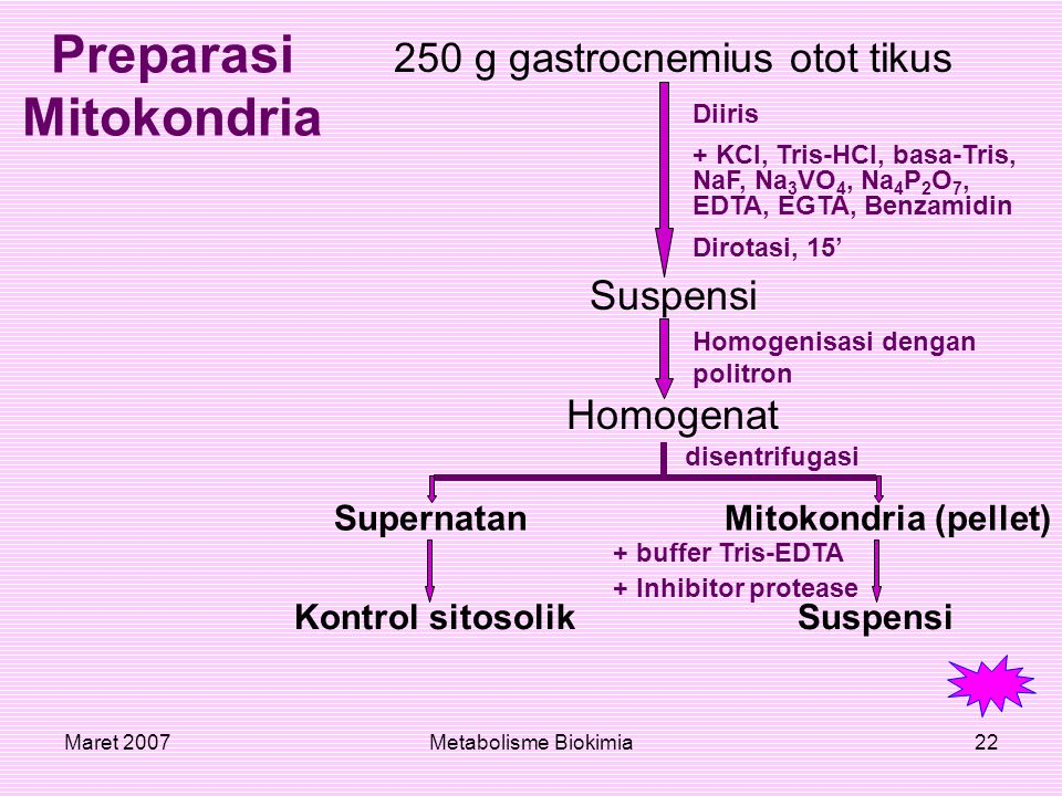 Maret 2007Metabolisme Biokimia22 Preparasi Mitokondria 250 g gastrocnemius otot tikus Suspensi Homogenat Diiris + KCl, Tris-HCl, basa-Tris, NaF, Na 3