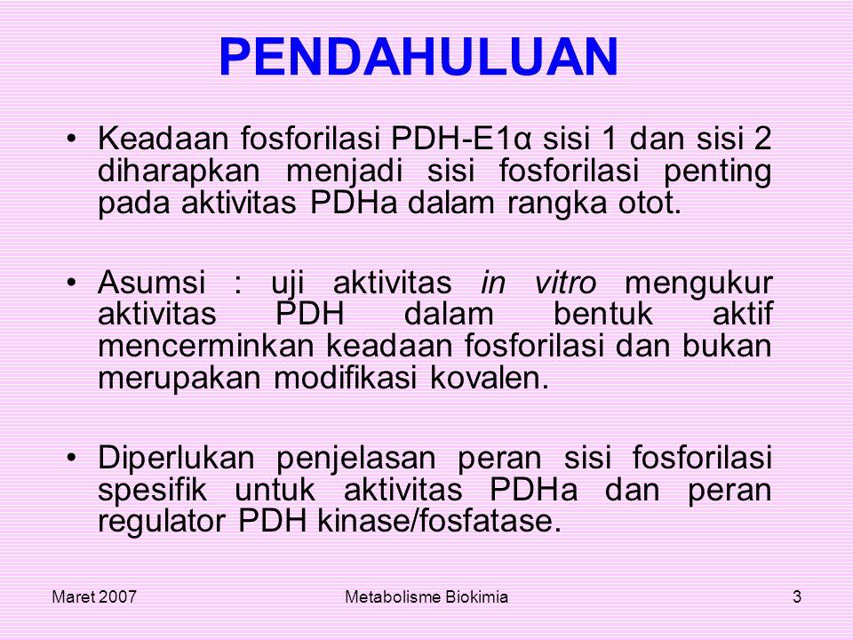 Maret 2007Metabolisme Biokimia3 PENDAHULUAN Keadaan fosforilasi PDH-E1α sisi 1 dan sisi 2 diharapkan menjadi sisi fosforilasi penting pada aktivitas P