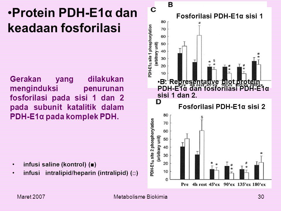 Maret 2007Metabolisme Biokimia30 Protein PDH-E1α dan keadaan fosforilasi Gerakan yang dilakukan menginduksi penurunan fosforilasi pada sisi 1 dan 2 pa