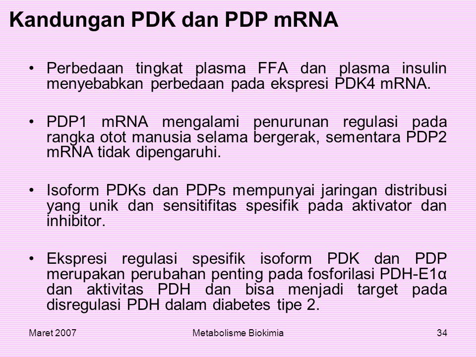 Maret 2007Metabolisme Biokimia34 Perbedaan tingkat plasma FFA dan plasma insulin menyebabkan perbedaan pada ekspresi PDK4 mRNA. PDP1 mRNA mengalami pe