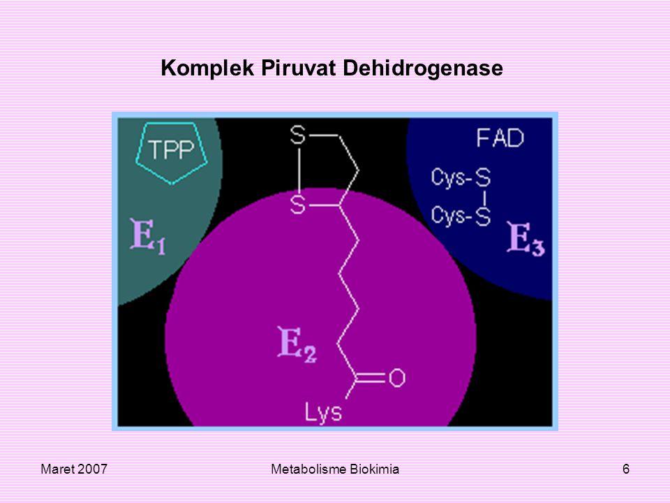 Maret 2007Metabolisme Biokimia7 Ikatan pada komponen PDC; PDH, E3, PDHKs (PDKs) dan PDPs