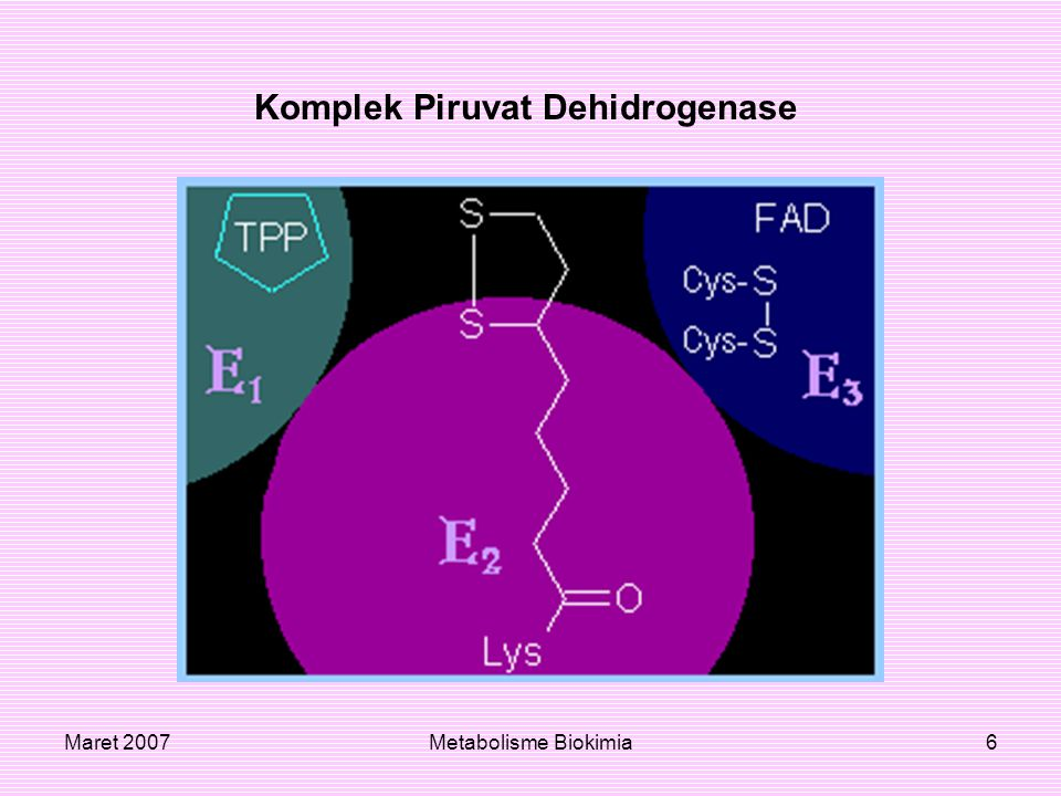 Maret 2007Metabolisme Biokimia6 Komplek Piruvat Dehidrogenase