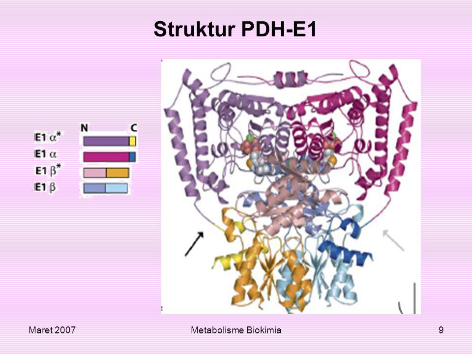 Maret 2007Metabolisme Biokimia30 Protein PDH-E1α dan keadaan fosforilasi Gerakan yang dilakukan menginduksi penurunan fosforilasi pada sisi 1 dan 2 pada subunit katalitik dalam PDH-E1α pada komplek PDH.