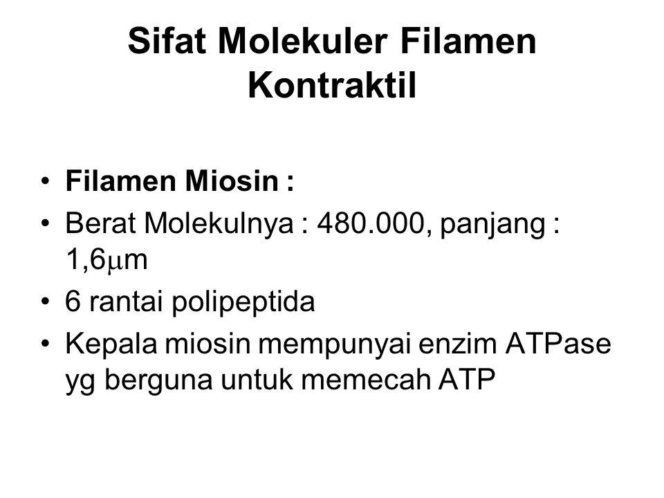 Sifat Molekuler Filamen Kontraktil Filamen Miosin : Berat Molekulnya : 480.000, panjang : 1,6  m 6 rantai polipeptida Kepala miosin mempunyai enzim A