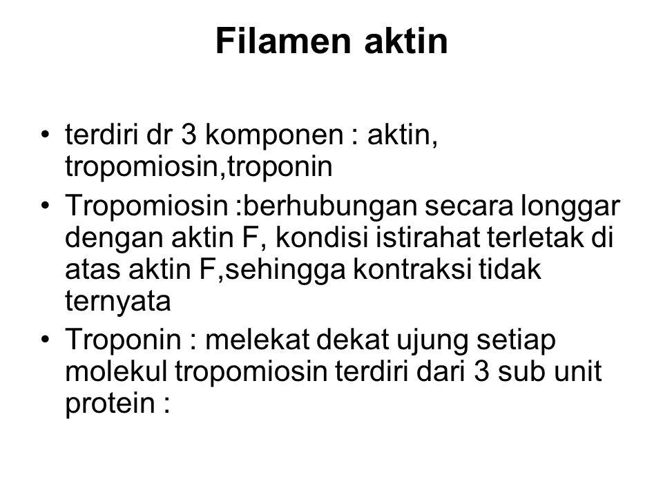 Filamen aktin terdiri dr 3 komponen : aktin, tropomiosin,troponin Tropomiosin :berhubungan secara longgar dengan aktin F, kondisi istirahat terletak d