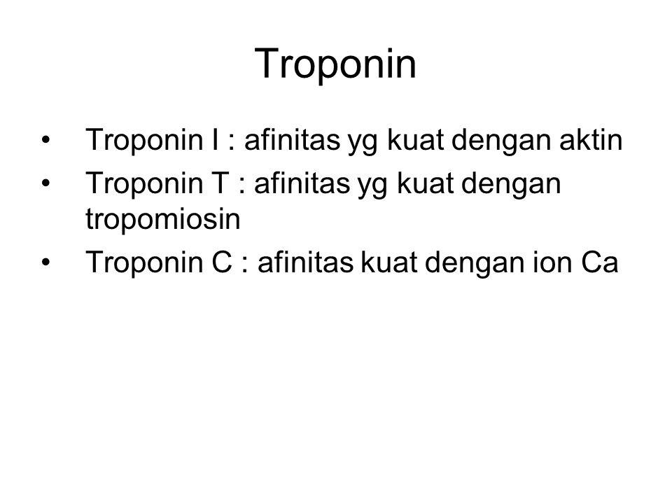 Troponin Troponin I : afinitas yg kuat dengan aktin Troponin T : afinitas yg kuat dengan tropomiosin Troponin C : afinitas kuat dengan ion Ca