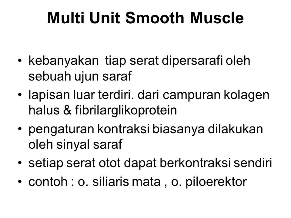 Multi Unit Smooth Muscle kebanyakan tiap serat dipersarafi oleh sebuah ujun saraf lapisan luar terdiri. dari campuran kolagen halus & fibrilarglikopro