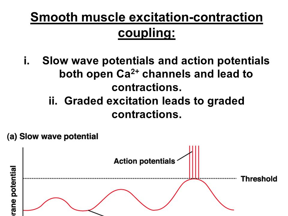 Smooth muscle excitation-contraction coupling: i.
