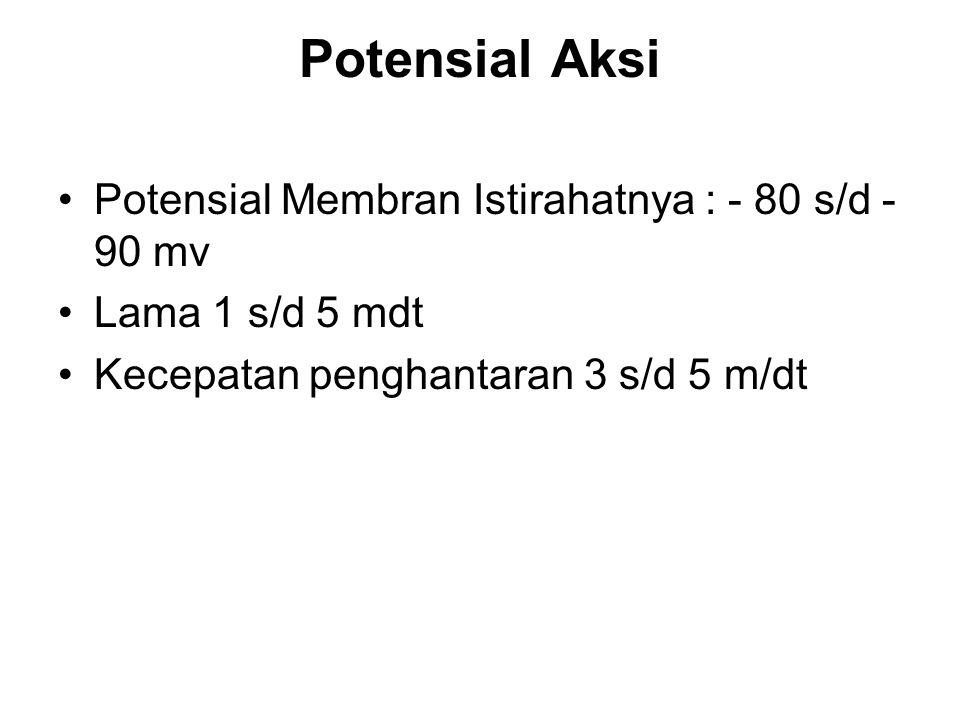 Potensial Aksi Membran Potensial Istirahat : -50 s/d -60 mv ada 2 macam : potensial aksi paku : lama 10-50mdt, timbul melalui rangs listrik, hormon, neurotransmiter, peregangan, scr spontan potensial aksi dgn plateau : menyebabkan kontraksi bertahan lama