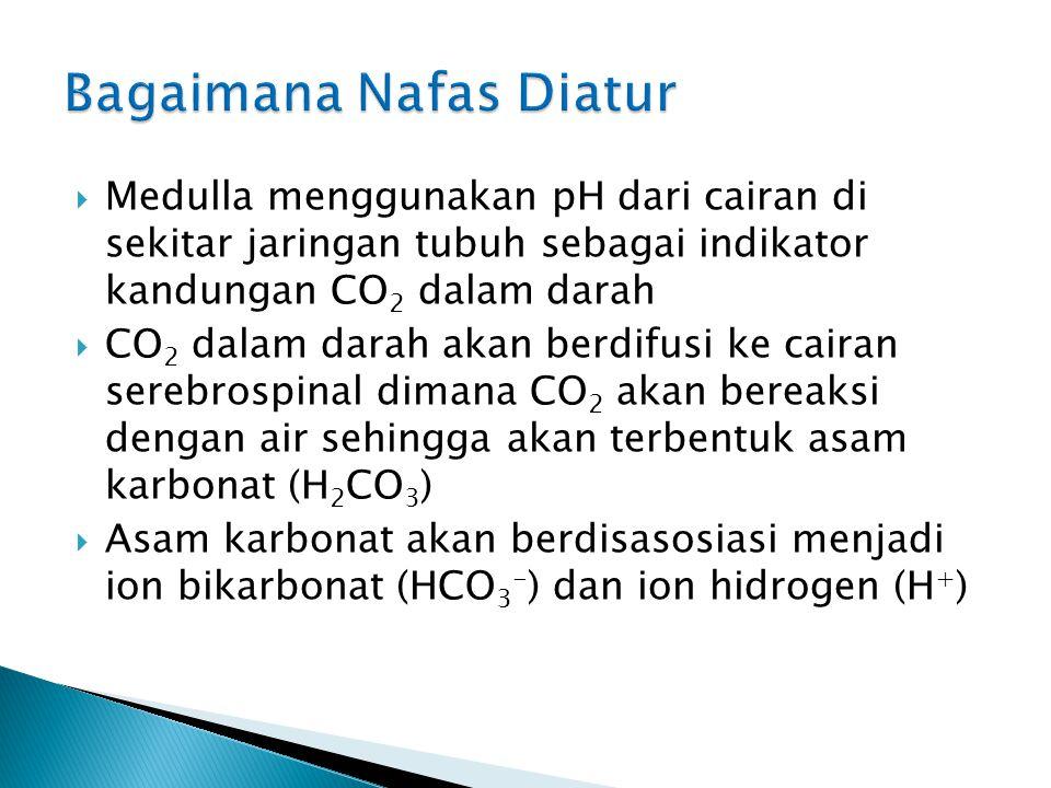  MEKANISME PERTUKARAN CO 2 dan O 2 Hb + O 2 Hb (O 2 ) 4 O 2 tinggi CO 2 rendah CO 2 tinggi O 2 rendah netral asam