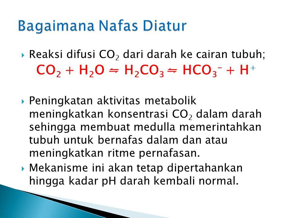  Medulla menggunakan pH dari cairan di sekitar jaringan tubuh sebagai indikator kandungan CO 2 dalam darah  CO 2 dalam darah akan berdifusi ke caira