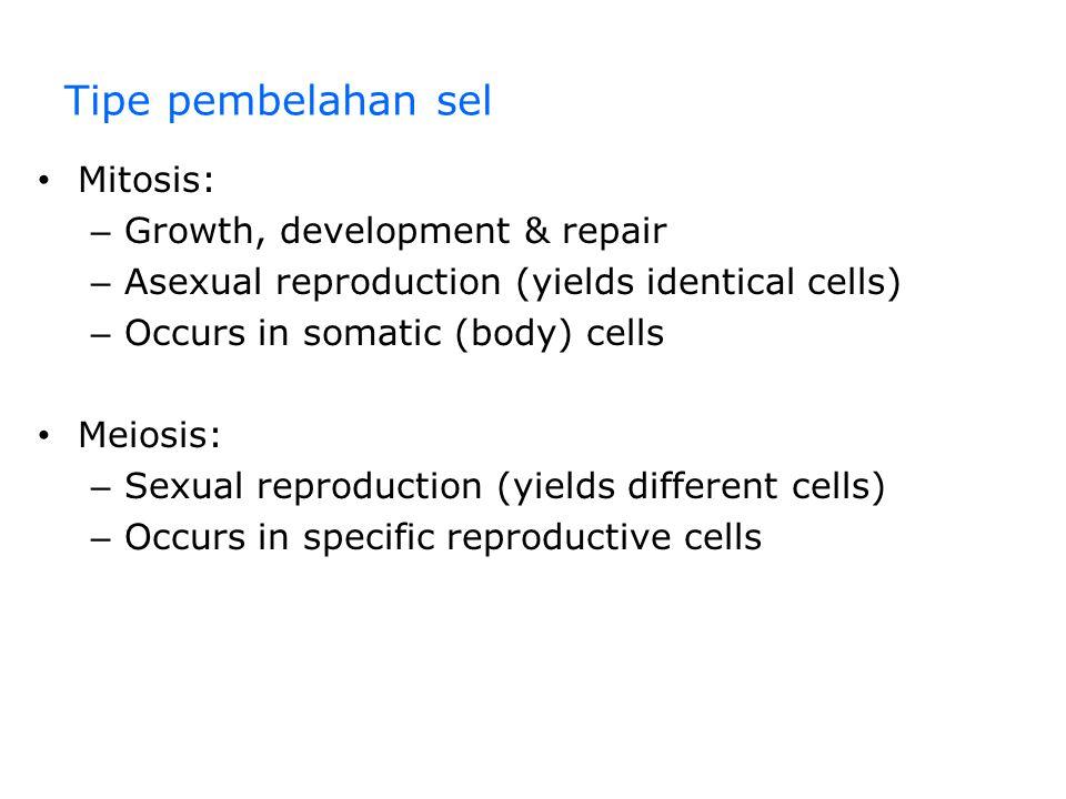 Fase-fase dalam siklus sel Siklus sel terdiri dari – Fase mitosis – Interphase INTERPHASE G1G1 S (DNA synthesis) G2G2 Cytokinesis Mitosis MITOTIC (M) PHASE Figure 12.5 Interphase – G 1 phase – S phase – G 2 phase The mitotic phase – mitosis – cytokinesis