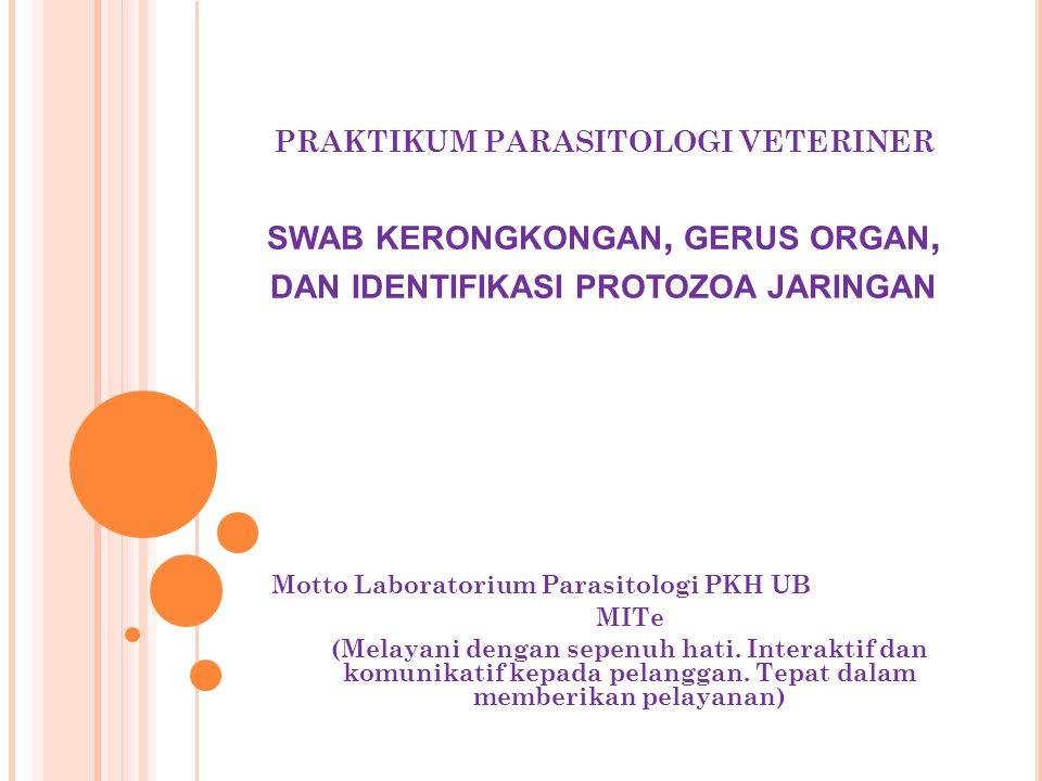 PRAKTIKUM PARASITOLOGI VETERINER SWAB KERONGKONGAN, GERUS ORGAN, DAN IDENTIFIKASI PROTOZOA JARINGAN Motto Laboratorium Parasitologi PKH UB MITe (Melay