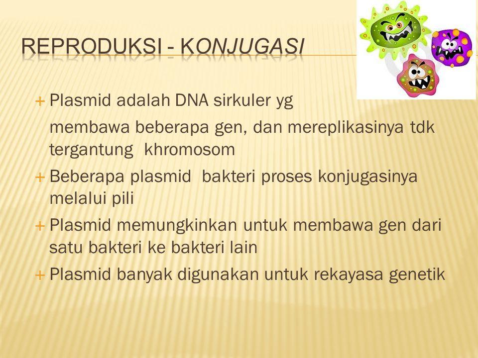  Plasmid adalah DNA sirkuler yg membawa beberapa gen, dan mereplikasinya tdk tergantung khromosom  Beberapa plasmid bakteri proses konjugasinya mela