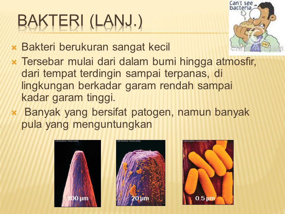  Ukuran panjang atau lebar bakteri berkisar antara 1 dan 10 nanometers  Ada 3 bentuk dasar  Coccus-sperical  Bacillus(rod)- cylindrical  Sprillum - helical coccus bacillus spirillum