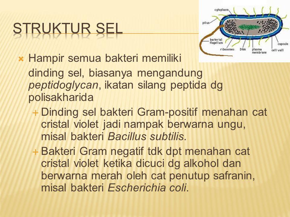  Hampir semua bakteri memiliki dinding sel, biasanya mengandung peptidoglycan, ikatan silang peptida dg polisakharida  Dinding sel bakteri Gram-posi